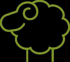 wełna owcza (ang. wool)