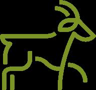 kaszmir (ang. cashmere, produkowany z wełny kóz kaszmirskich)