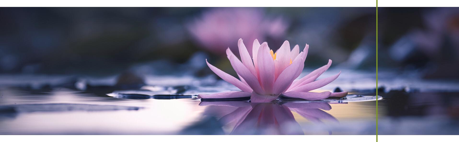 Inne superfood w naturalnych kosmetykach – centella asiatica i lotos
