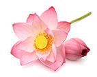 Centella Asiatica  + lotos